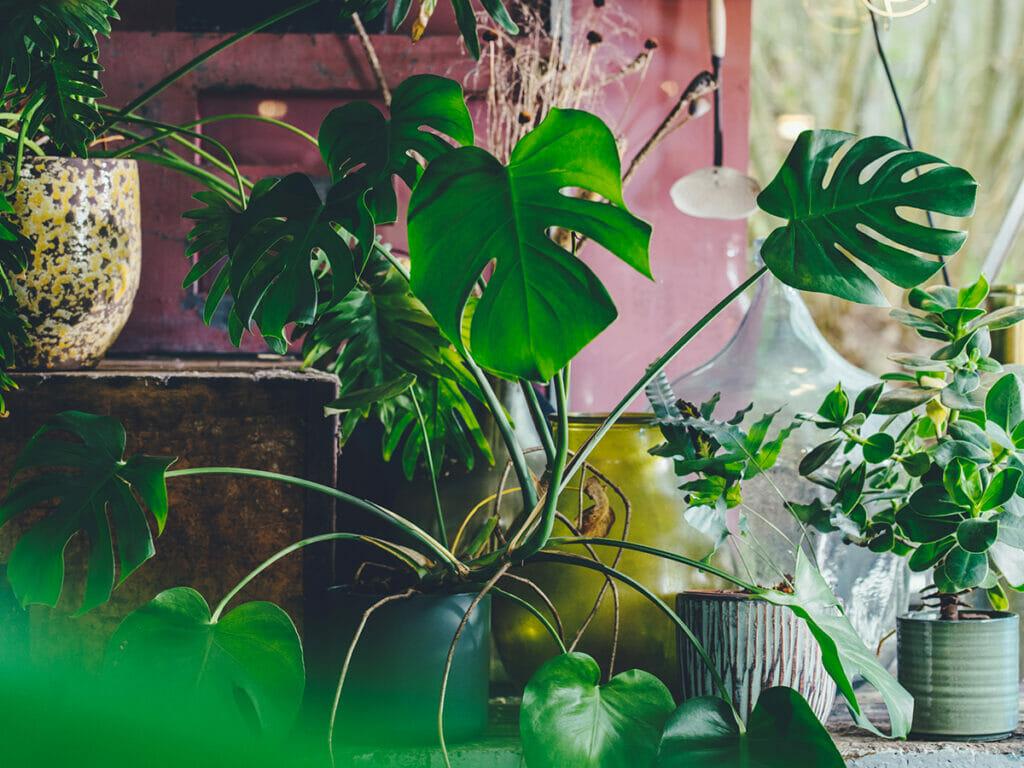 אביזרים משלימים צמחייה